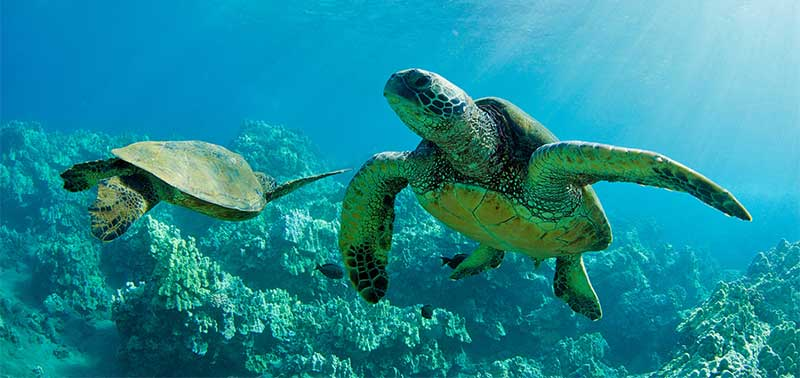 social sea turtles