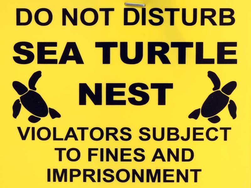Guidelines for watching Sea Turtles