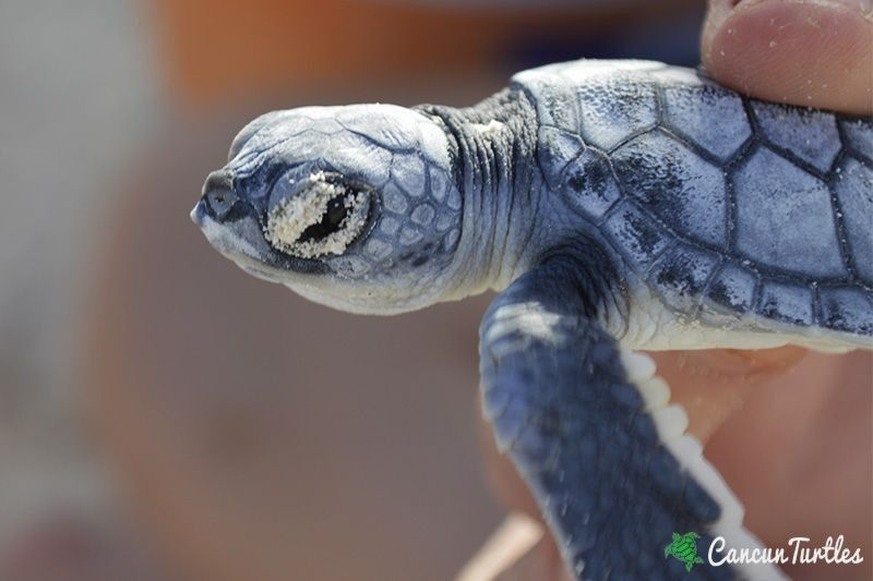 TV Report about Sea Turtle Protection Program in Cancun features us