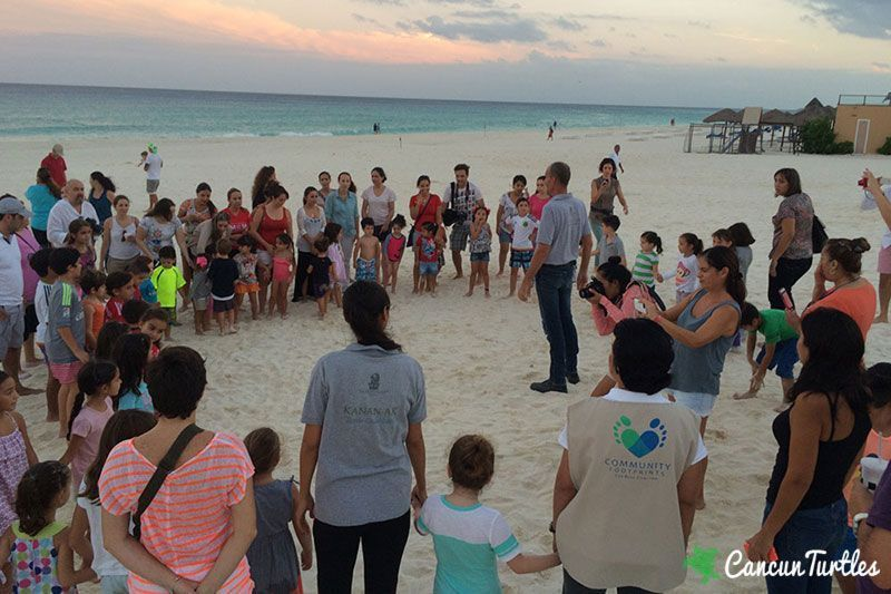sea turtle hatchling release 02 10 2015