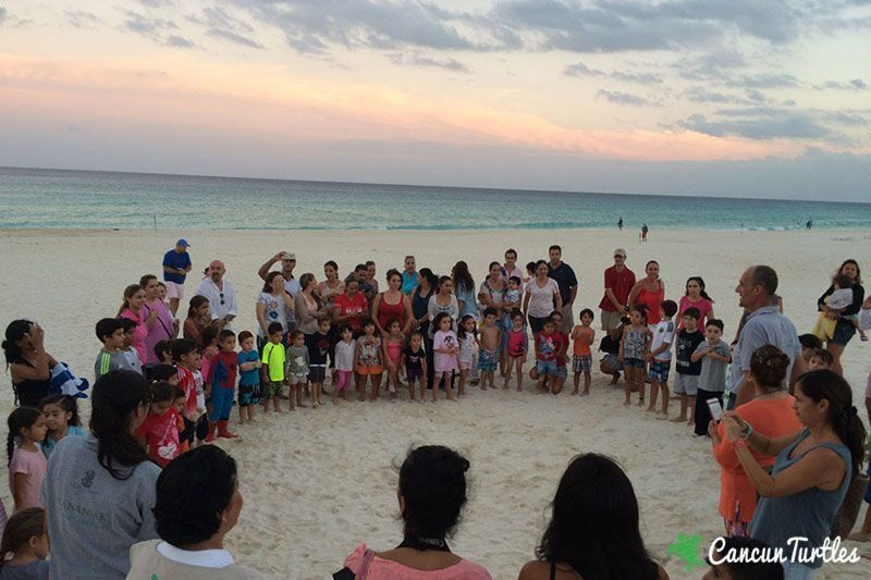 sea turtle hatchling release 02 10 2015 2