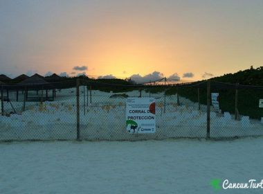 Sea Turtle protection area