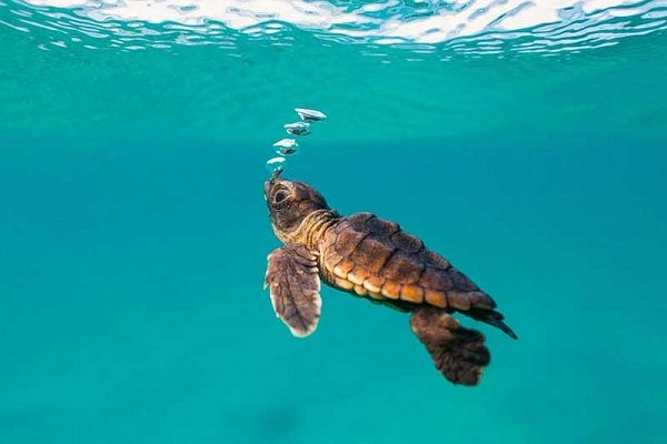 The Lost Years (the Lost Decade) in the life of Sea Turtles