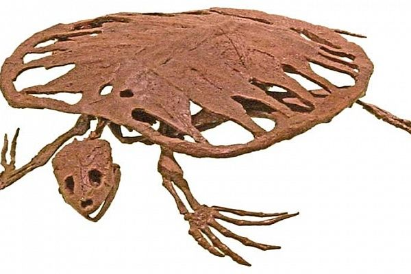 A fossil Toxochelys from about 75 million years ago