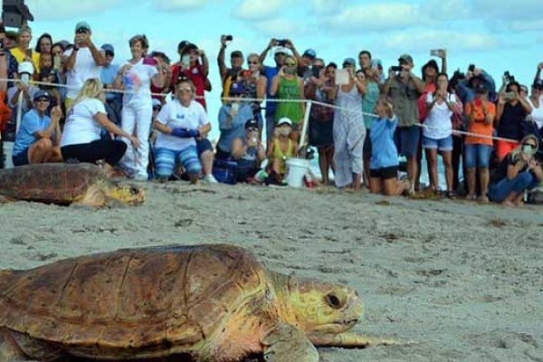 Sea Turtles and Humans - The Dilemma